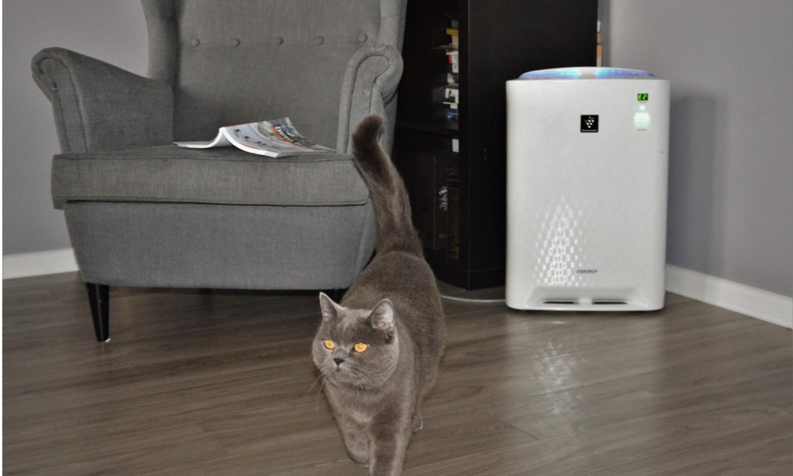 Kot w mieszkaniu przy oczyszczaczu Sharp KC-A40EUW