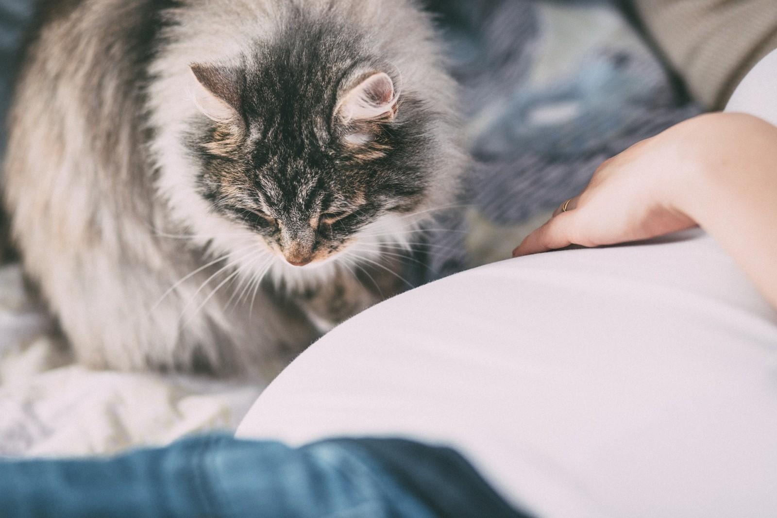 Kot z kobietą
