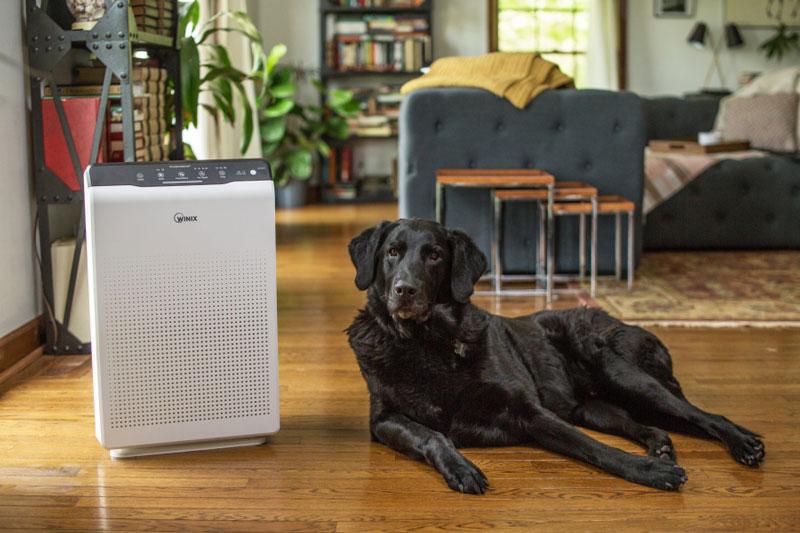 Oczyszczacz powietrza Winix Zero i pies