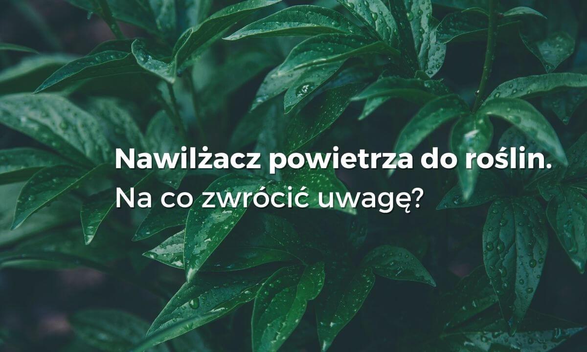 Jaki nawilżacz dla roślin wybrać wybierzoczyszczacz.pl